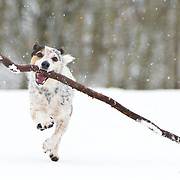 Photos of dogs taken in Brighton by Brighton Dog Photography