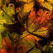 "Archival pigment print, 30""x30"" (76cm x76cm)      Edition of 15+1 AP.                                     42""x42"" (107cmx107cm)    Edition of 5+2 AP"