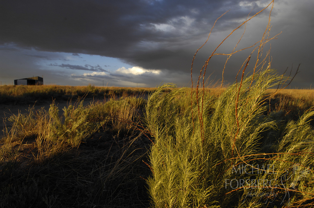 Shortgrass prairie region - Front Range, CO..Bohart Ranch . Assorted landscapes with Front Range, sandsage prairie and thunderheads..