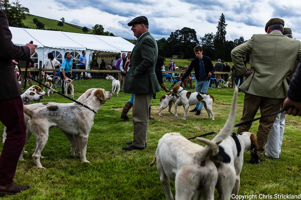 The Wells, Bedrule, Bonchester Bridge, Hawick, UK. 26th July 2015. The Jedforest Hunt Hound, Terrier & Lurcher show in the countryside of the Scottish Borders brings together a plethora of people in a celebration of their hunting breeds.