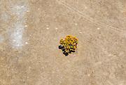 Western Australian Christmas Tree - @Martine Perret - Margaret River aerial shot 13 December 2013