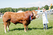 The Angus Show, Brechin, Saturday 8th June, 2013. Limousin champ from R & K Davidson