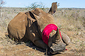 Rhino Capture