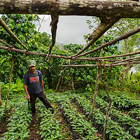 A coffee farmer looks at a portion of his crop in the hills of Copan, Honduras Oct, 10, 2014.