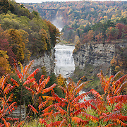 """From Inspiration Point, see Middle and Upper Genesee Falls amid the splendor of autumn leaf colors, at Letchworth State Park, near Portageville, New York, USA. In Letchworth State Park, renowned as the """"Grand Canyon of the East,"""" the Genesee River roars northeast through a gorge over three major waterfalls between cliffs as high as 550 feet, surrounded by diverse forests which turn bright fall colors in the last three weeks of October. The large park stretches 17 miles between Portageville and Mount Morris in the state of New York, USA. Drive or hike to many scenic viewpoints along the west side of the gorge. The best walk is along Gorge Trail #1 above Portage Canyon from Lower Genesee Falls (70 ft high), to Inspiration Point, to Middle Genesee Falls (tallest, 107 ft), to Upper Genesee Falls (70 ft high). High above Upper Falls is the railroad trestle of Portageville Bridge, built in 1875, to be replaced 2015-2016. Geologic history: in the Devonian Period (360 to 420 million years ago), sediments from the ancestral Appalachian mountains eroded into an ancient inland sea and became the bedrock (mostly shales with some layers of limestone and sandstone plus marine fossils) now exposed in the gorge. Genesee River Gorge is very young, as it was cut after the last continental glacier diverted the river only 10,000 years ago. The native Seneca people were largely forced out after the American Revolutionary War, as they had been allies of the defeated British. Letchworth's huge campground has 270 generously-spaced electric sites. The image was stitched from 2 overlapping photos to increase depth of focus."""
