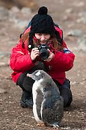 Chinese tourist Elsa Peng photographing juvenille gentoo penguin, Pygoscelis papua, Antarctica