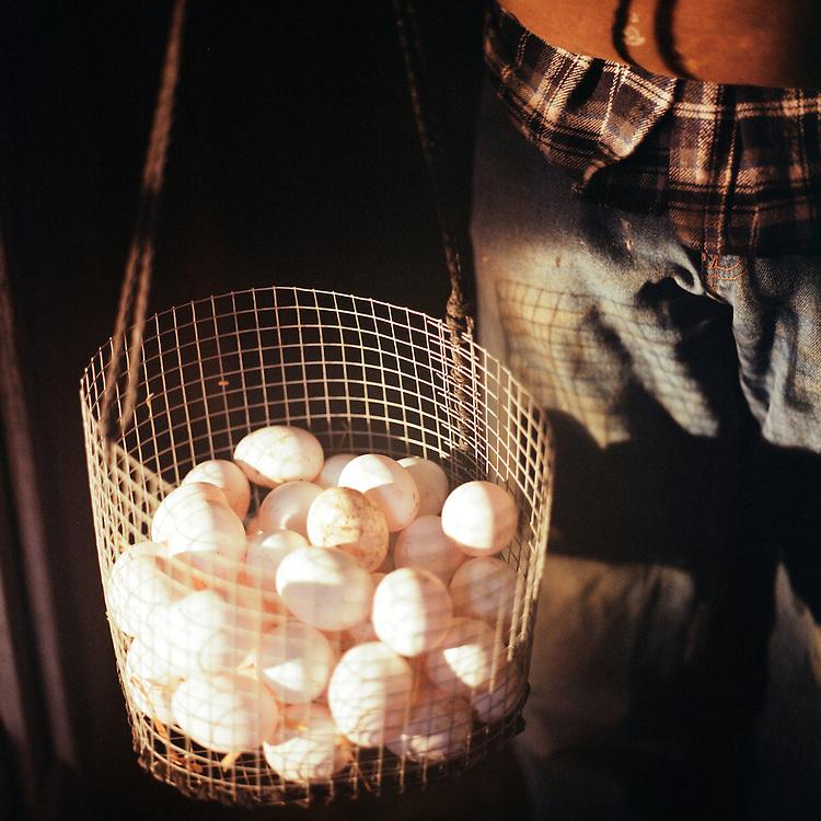 BETHEL, ALASKA - 2011: Meyers Organic Farm chicken eggs.