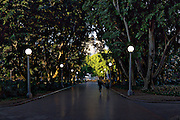 An ealry morning view of Hyde Park Walkway, a fig-lined avenue in Hyde Park, Sydney. It is on the eastern side of the Sydney city centre.