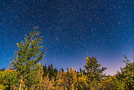 The autumn constellations of Cassiopeia, Andromeda and Perseus, with the Andromeda Galaxy, above yellow aspen trees on a moonlit autumn night. I shot this from Elbow Falls in the Kananaskis area of southern Alberta. <br /> <br /> This is a single 15 second exposure with the 24mm lens at f/2.5 and Nikon D750 at ISO 800.