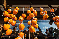 Drying Persimmons, haning and suspended in the sun, the Japanese way of curing fruit and vegetables.