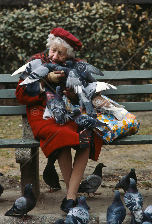 Elderly woman on a park bench with many pigeons on her body in Central Park, NY