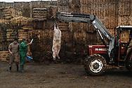 The Pig killing, Toledo, Spain.