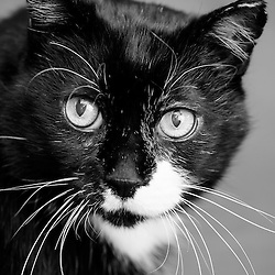 Mendelssohn - Cat
