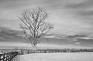 Winter tree outside of a horse pasture in rural Kentucky.  Infrared (IR) photograph by fine art photographer Michael Kloth.