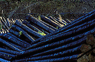 05/01/00 - EGLETONS - CORREZE - FRANCE - Aire de stockage de bois par aspersion sur le site de l'Empereur. Suite a la tempete de decembre 1999 - Photo Jerome CHABANNE