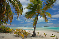 Coconut palms trees and white sand beach and blue sky, Tapuaetai island (one foot island), Aitutaki atoll, Cook Islands, South Pacific.