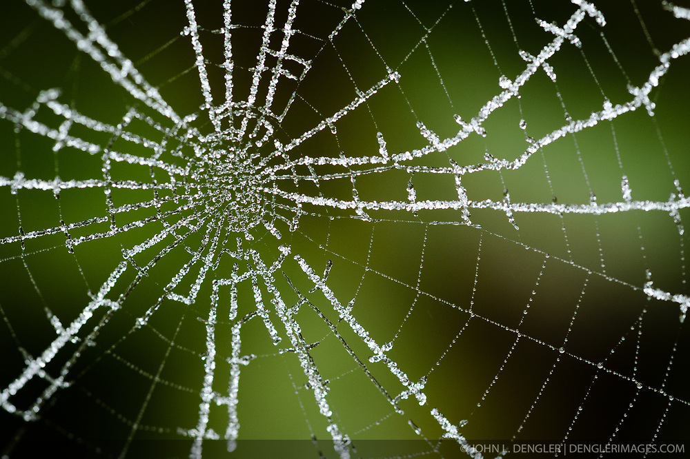 A fall frost delicately adheres to a spider web in a backyard in Springfield, Mo.