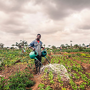 """One of the many """"Machamba"""" outside Maputo: cultivated fields owned and managed by the habitants of Maputo themselfs. The day the war ended in 1992, people of Maputo left their houses and started cultivate these fields. The FMA sisters own too some fields and let Mozambicans work on them"""