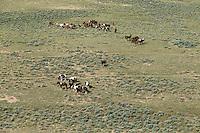 Aerial photos of wild mustangs in Wyoming