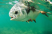 Saltwater Fishing Stock Photos