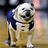 INDIANAPOLIS, IN - JANUARY 26: Soon to retire Butler Bulldogs mascot Blue II is seen on the court before the game against the Temple Owls at Hinkle Fieldhouse on January 26, 2013 in Indianapolis, Indiana. (Photo by Michael Hickey/Getty Images) *** Local Caption *** Blue II