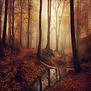 Serene forest scenery at sunrise in autumn<br /> Redbubble Products: http://rdbl.co/2n5G7bq
