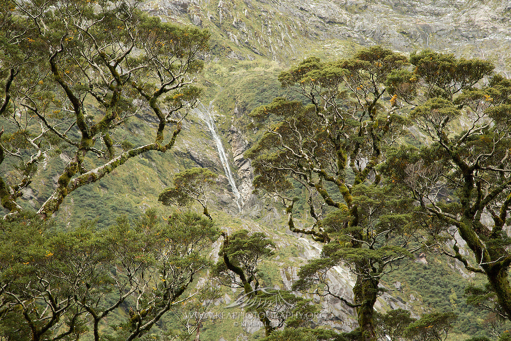 After heavy rainfall, freshly created waterfalls stream down the steep valleys in Fiordland National Park.