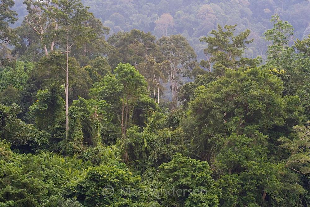 Tropical rainforest along the Sungai Pahang River in Taman Negara National Park, Malaysia..
