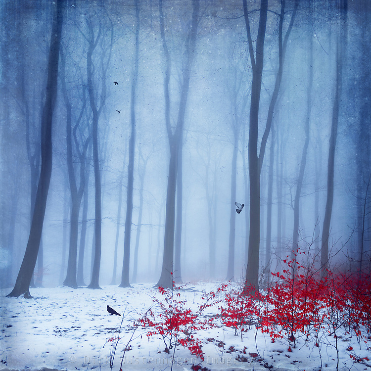 Dreamy forest on a misty day in Midwinter - texturized manipulated photograph<br /> <br /> PRINTS: http://society6.com/product/how-do-you-know-32p_print#1=45