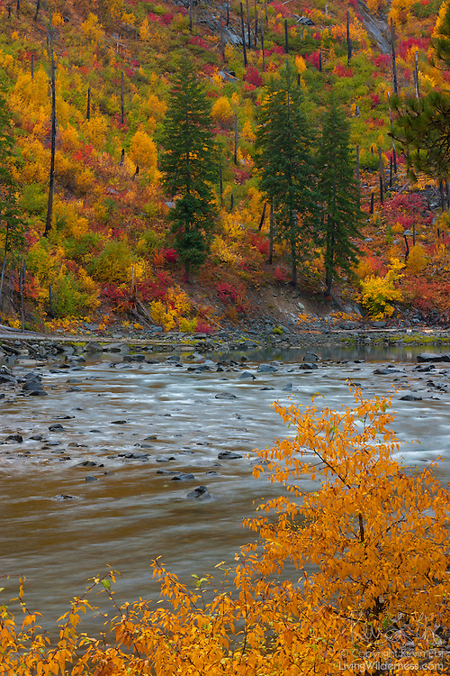 Fall color lines both banks of the Wenatchee River as it flows through Tumwater Canyon near Leavenworth, Washington.