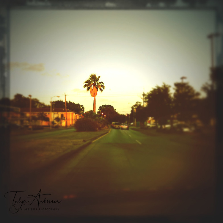 Palm tree on the road - Houston, Texas