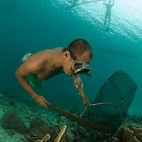 Pecheur &agrave; la recherche de poissons cardinaux des iles Banggais<br /> <br /> Poisson cardinal des iles Banggais, Pterapogon kauderni. End&eacute;mique des &Icirc;les Banggais, ce poisson poss&egrave;de une aire de r&eacute;partition tr&egrave;s limit&eacute;e pour un poisson marin. Depuis quelques ann&eacute;es, il subit une forte pression de la p&ecirc;che pour le commerce de l'aquariophilie (plusieurs milliers de poissons sont captur&eacute;s chaque mois) ce qui a conduit cette esp&egrave;ce en 2007 a &ecirc;tre class&eacute;e dans la cat&eacute;gorie Endangered sur la liste rouge de l'UICN. village de Bonebaru sur l'ile Banggai dans les Sulawesis en Indon&eacute;sie - Mission Banggai Cardinal Fish, Mai 2008, Act for Nature - Musee oceanographique de Monaco