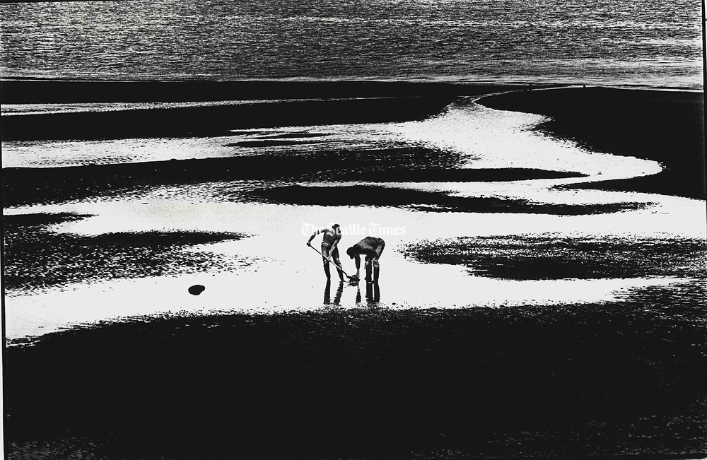 Taking advantage of minus tide conditions at Alki Beach, visitors from Star, Idaho, dig for clams and anything else of interest while vacationing in Seattle. (Jimi Lott / The Seattle Times, 1988)