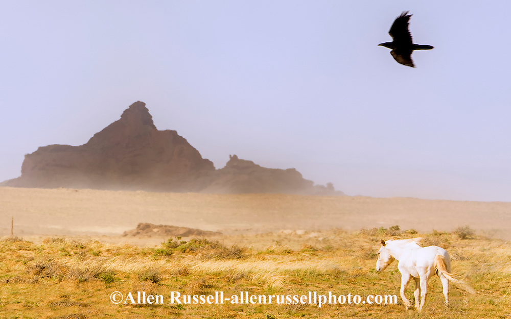 White Horse, Raven, Navajo Indian Reservation, south of Shiprock, New Mexico