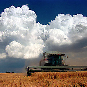 A thunderstorm looms during wheat harvest in eastern Colorado.