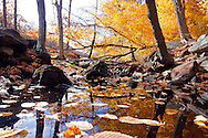 A colorful, brilliant, fall nature image with stream.
