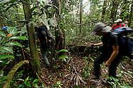 """AUYANTEPUY, VENEZUELA. Excursionistas entrando a la selva.  El Auyantepuy es el mayor de los tepuis del Parque Nacional Canaima. En sus 700 kms2 alberga el salto angel o conocido por lengua indígena Pemon como """"Kerepacupai Vena; es la caída de agua más grande del mundo con sus 979 metros de altura. (Ramon lepage /Orinoquiaphoto/LatinContent/Getty Images)"""