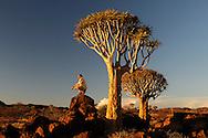 Quiver Tree Forest, Keetmanshoop, Karas Region, Namibia