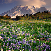 Mount Rainier National Park