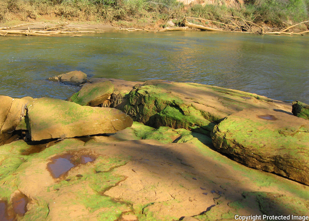Chattahoochee River, Georgia. Algae covered river rock.