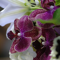 Phalaenopsis with Lily