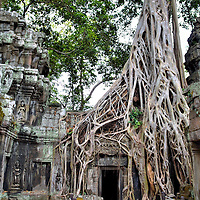 Jungle Temple of Ta Prohm in Angkor Archaeological Park, Cambodia <br /> French naturalist Henri Mouhot is credited with &ldquo;discovering&rdquo; the ancient temples of Angkor in 1860. His actual accomplishment was popularizing these archeological ruins among Europeans. This sparked a major restoration effort during the 20th century managed by &Eacute;cole fran&ccedil;aise d&rsquo;Extr&ecirc;me-Orient (French School of the Far East). Many of the structures were reclaimed from the vegetation engulfing them. The exception is Ta Prohm, nicknamed the Jungle Temple. Much of this complex had become ensnarled in the roots of giant sprongs, strangler figs and silk cotton trees. Removing them meant destroying the buildings so the wooden tentacles were left in place. The result is an enchanting beauty.