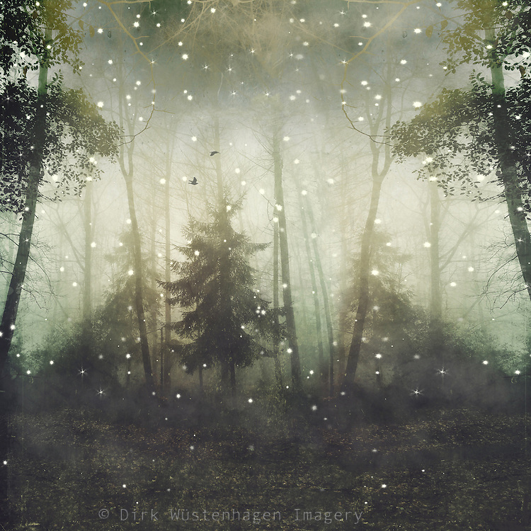 Surreal forest scenery - manipulated photograph<br /> Prints &amp; more: https://society6.com/product/wonders-and-mysteries_print#1=45