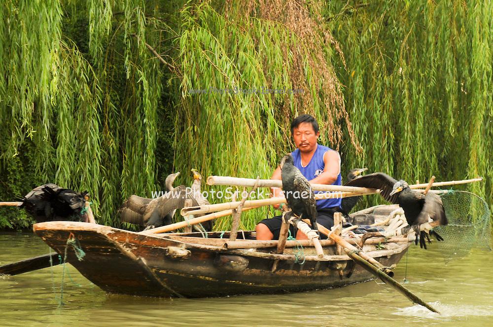 China, Zhejiang Province, Wuzhen Cormorant Fishing on the waterway