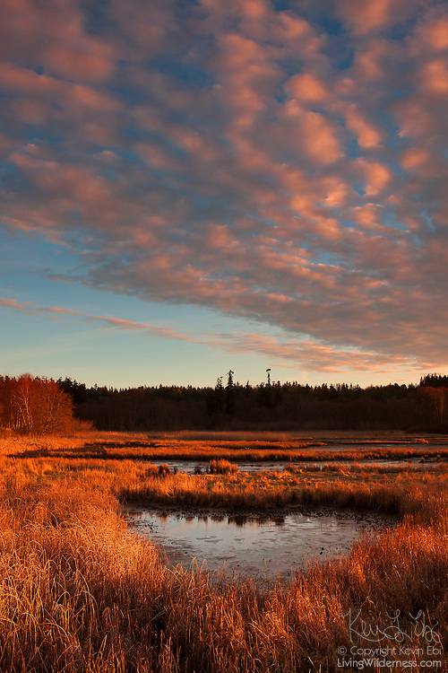 The setting sun lights up low clouds over the Edmonds Marsh in Edmonds, Washington. The 23-acre saltwater marsh is home to more than 200 species of birds each year and is one of the last remaining saltwater estuaries in the greater Seattle area.