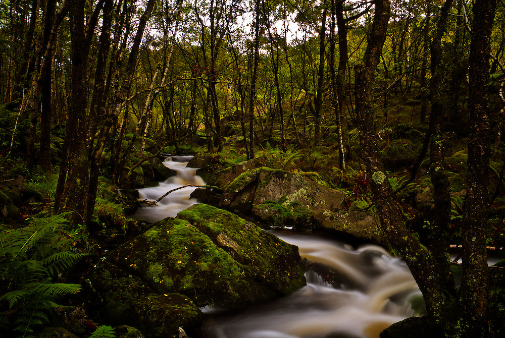 A woodland stream in the fall.