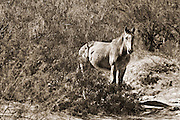 Lonely horse. Big Bend National Park.