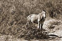 Lonely horse. Big Bend National Park.