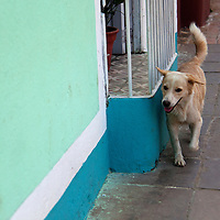 Central America, Cuba, Trinidad. Wandering dog in Trinidad.