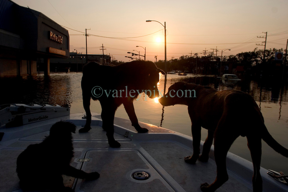 05 Sept  2005. New Orleans, Louisiana. Post hurricane Katrina.<br /> Animal rescue boat. Dogs greet each other as the sun drops in the horizon over a devastaed New Orleans.<br /> Photo; &copy;Charlie Varley/varleypix.com